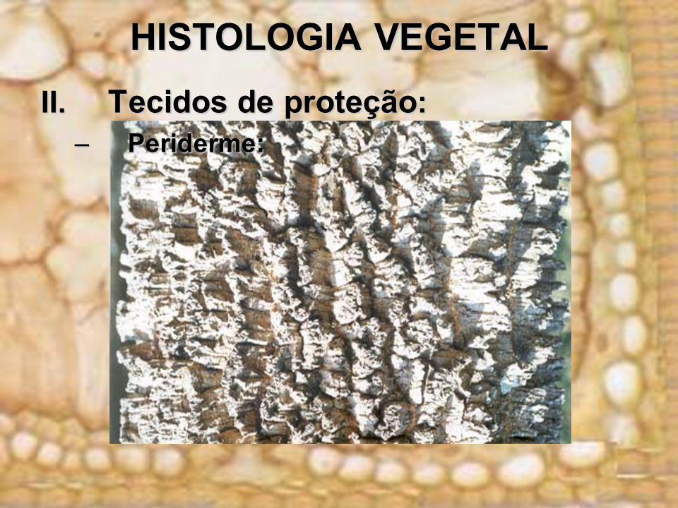 HISTOLOGIA VEGETAL II. Tecidos de proteção : –Periderme: