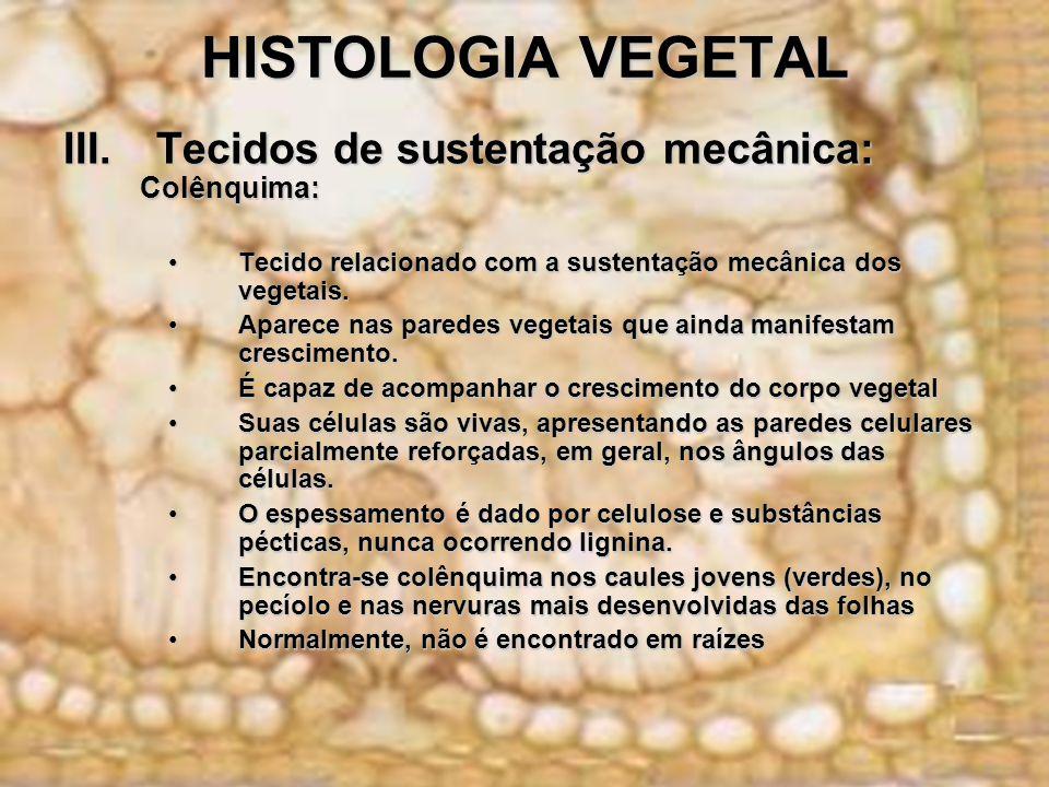 HISTOLOGIA VEGETAL III.Tecidos de sustentação mecânica: Colênquima: Colênquima: Tecido relacionado com a sustentação mecânica dos vegetais.Tecido rela