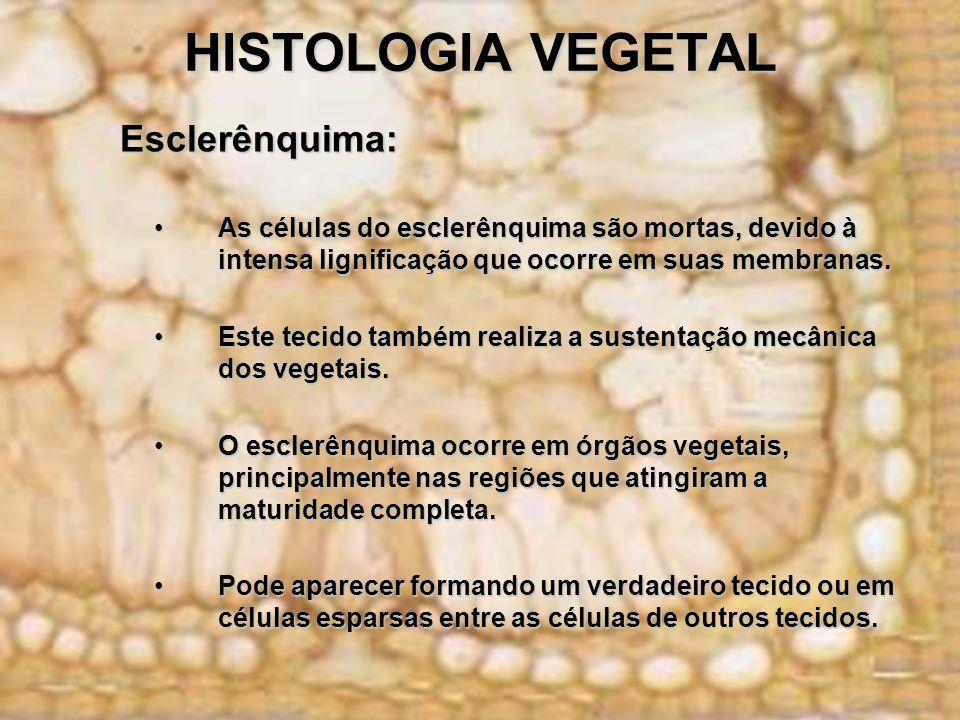 HISTOLOGIA VEGETAL Esclerênquima: Esclerênquima: As células do esclerênquima são mortas, devido à intensa lignificação que ocorre em suas membranas.As