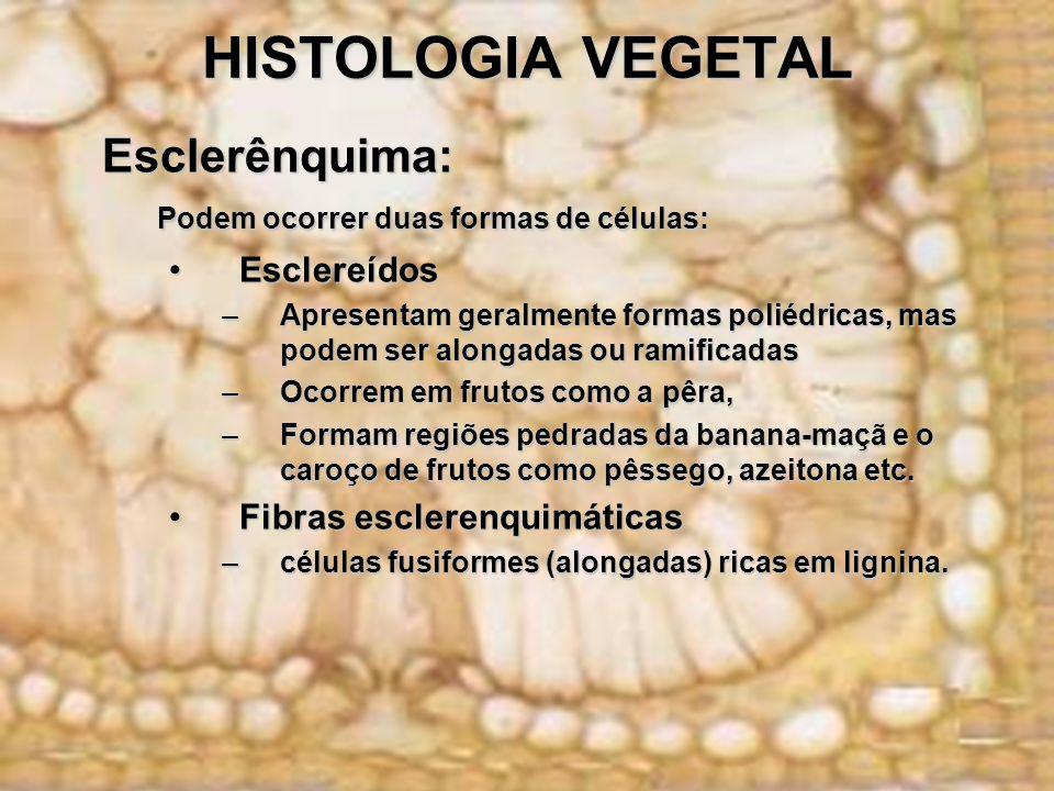 HISTOLOGIA VEGETAL Esclerênquima: Esclerênquima: Podem ocorrer duas formas de células: EsclereídosEsclereídos –Apresentam geralmente formas poliédrica