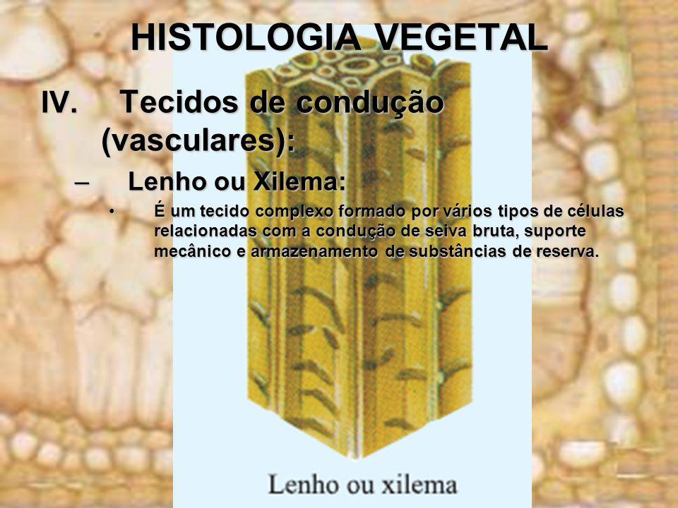 HISTOLOGIA VEGETAL IV. Tecidos de condução (vasculares) : –Lenho ou Xilema: É um tecido complexo formado por vários tipos de células relacionadas com