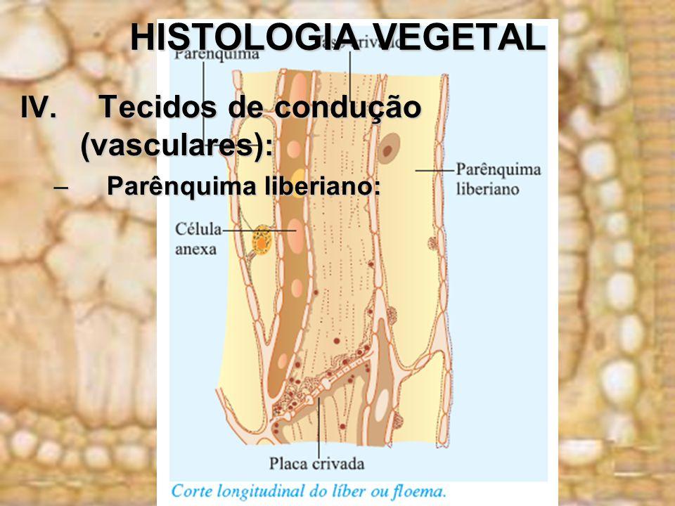 HISTOLOGIA VEGETAL IV. Tecidos de condução (vasculares) : –Parênquima liberiano: