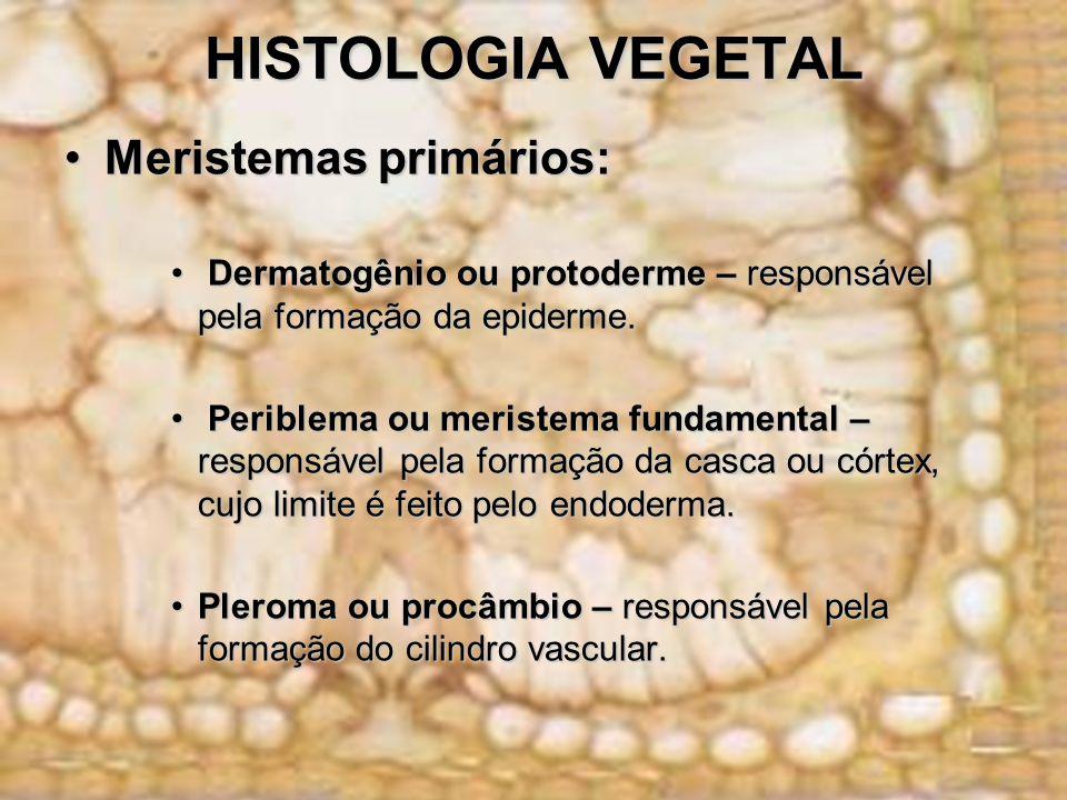 HISTOLOGIA VEGETAL Meristemas primários:Meristemas primários: Dermatogênio ou protoderme – responsável pela formação da epiderme. Dermatogênio ou prot