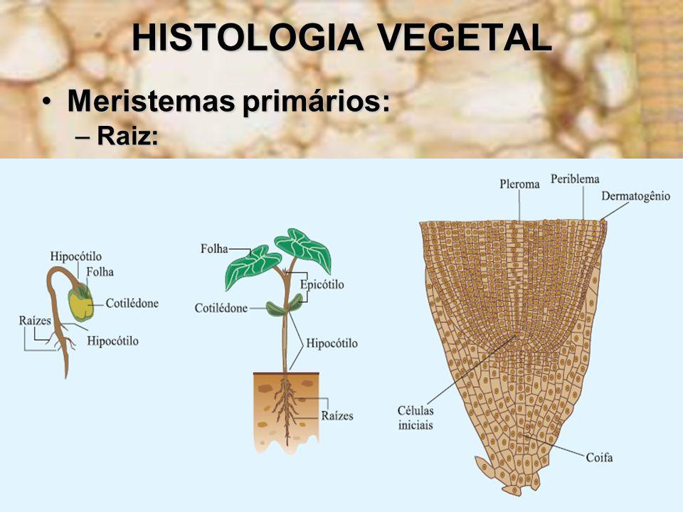 HISTOLOGIA VEGETAL Meristemas primários:Meristemas primários: –Raiz: