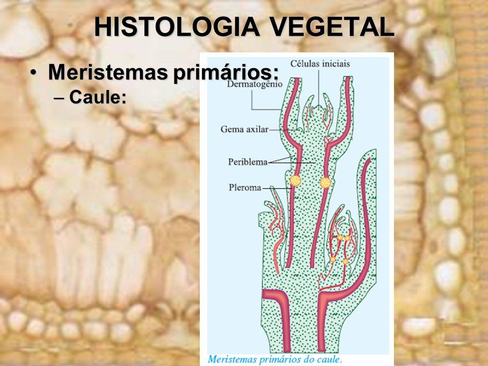 HISTOLOGIA VEGETAL Meristemas secundários:Meristemas secundários: Já os meristemas secundários são aqueles que se originam por desdiferenciação de células adultas, Já os meristemas secundários são aqueles que se originam por desdiferenciação de células adultas, As células produzidas por esses meristemas são enviadas lateralmente, razão pela qual são também chamadas meristemas laterais.As células produzidas por esses meristemas são enviadas lateralmente, razão pela qual são também chamadas meristemas laterais.