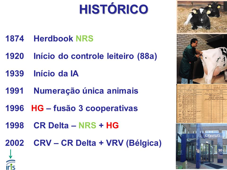5 HISTÓRICO 1874Herdbook NRS 1920Início do controle leiteiro (88a) 1939Início da IA 1991Numeração única animais 1996 HG – fusão 3 cooperativas 1998CR