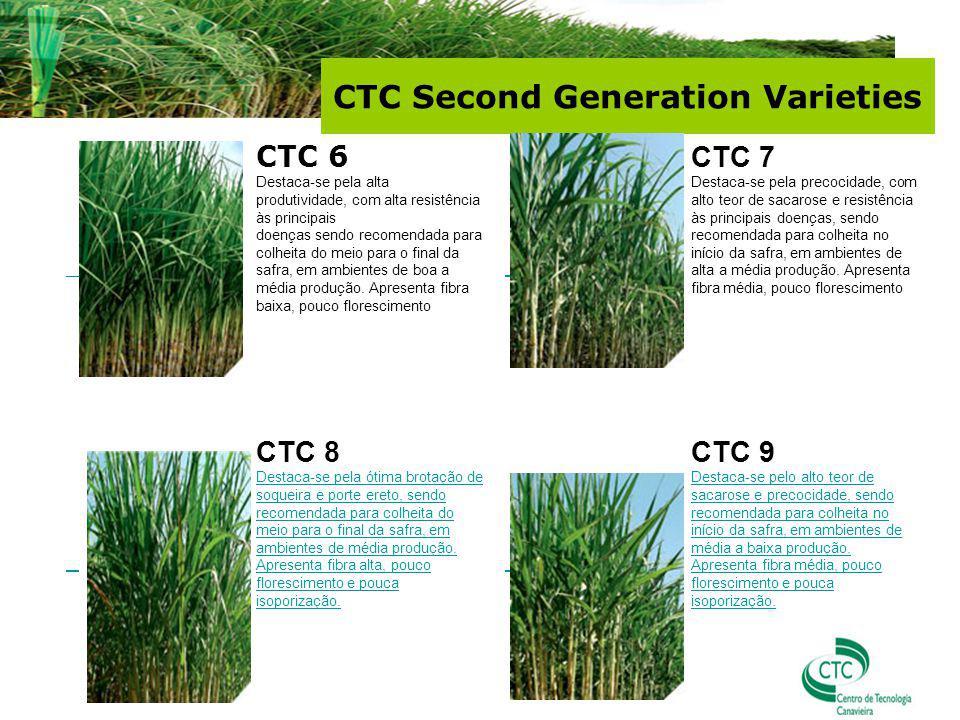 CTC 6 Destaca-se pela alta produtividade, com alta resistência às principais doenças sendo recomendada para colheita do meio para o final da safra, em