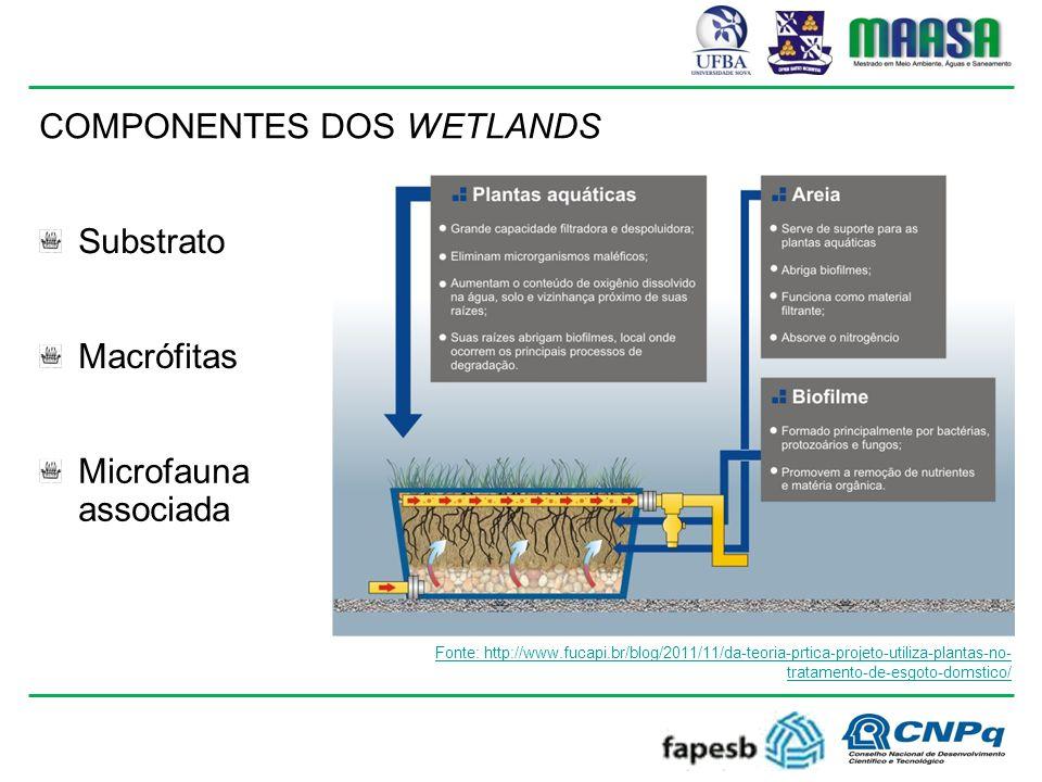 COMPONENTES DOS WETLANDS Substrato Macrófitas Microfauna associada Fonte: http://www.fucapi.br/blog/2011/11/da-teoria-prtica-projeto-utiliza-plantas-no- tratamento-de-esgoto-domstico/