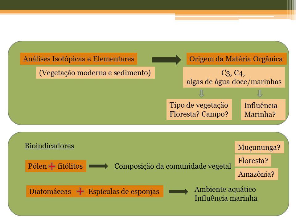 Análises Isotópicas e Elementares (Vegetação moderna e sedimento) Origem da Matéria Orgânica C3, C4, algas de água doce/marinhas Tipo de vegetação Flo