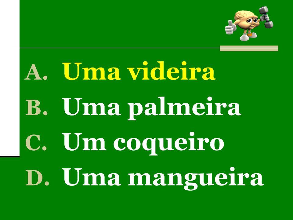 A. Uma videira B. Uma palmeira C. Um coqueiro D. Uma mangueira