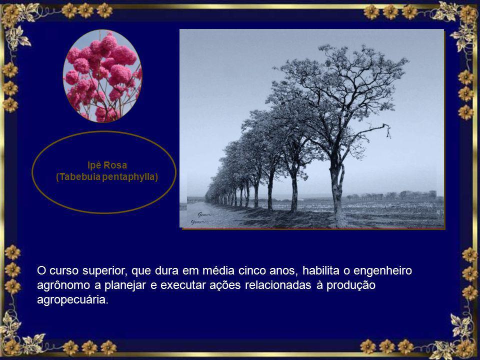 Ipê Rosa (Tabebuia pentaphylla) O curso superior, que dura em média cinco anos, habilita o engenheiro agrônomo a planejar e executar ações relacionadas à produção agropecuária.