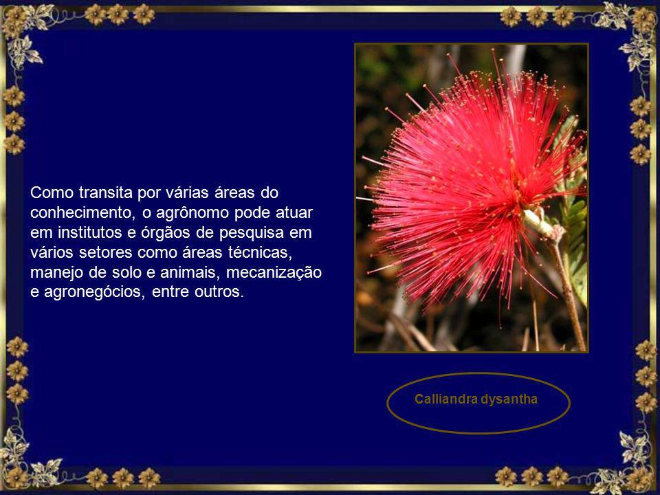 A região do Cerrado no Brasil que comporta 21% do país, é a maior extensão de savana na América do Sul.