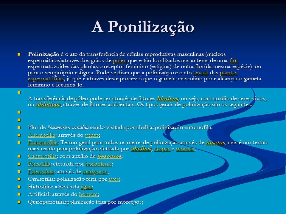 A Ponilização Polinização é o ato da transferência de células reprodutivas masculinas (núcleos espermáticos)através dos grãos de pólen que estão localizados nas anteras de uma flor espermatozoides das plantas,o receptor feminino (estigma) de outra flor(da mesma espécie), ou para o seu próprio estigma.