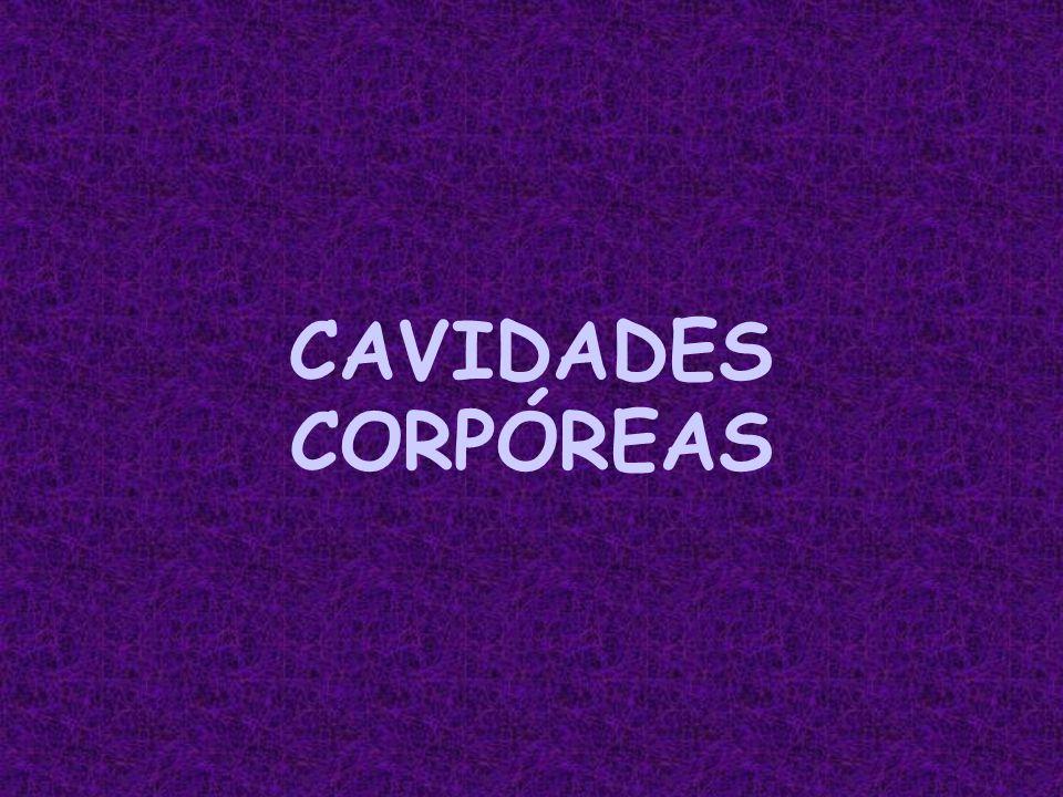CAVIDADES CORPÓREAS