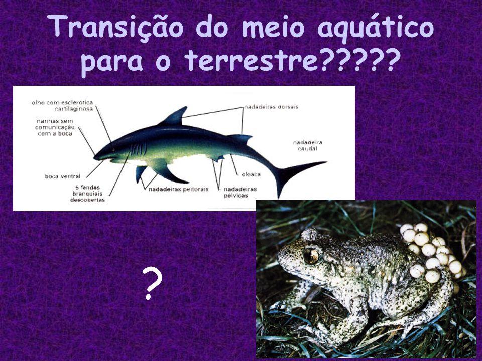 Transição do meio aquático para o terrestre????? ?