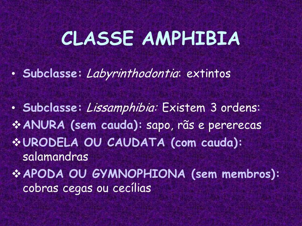 CLASSE AMPHIBIA Subclasse: Labyrinthodontia: extintos Subclasse: Lissamphibia: Existem 3 ordens:  ANURA (sem cauda): sapo, rãs e pererecas  URODELA