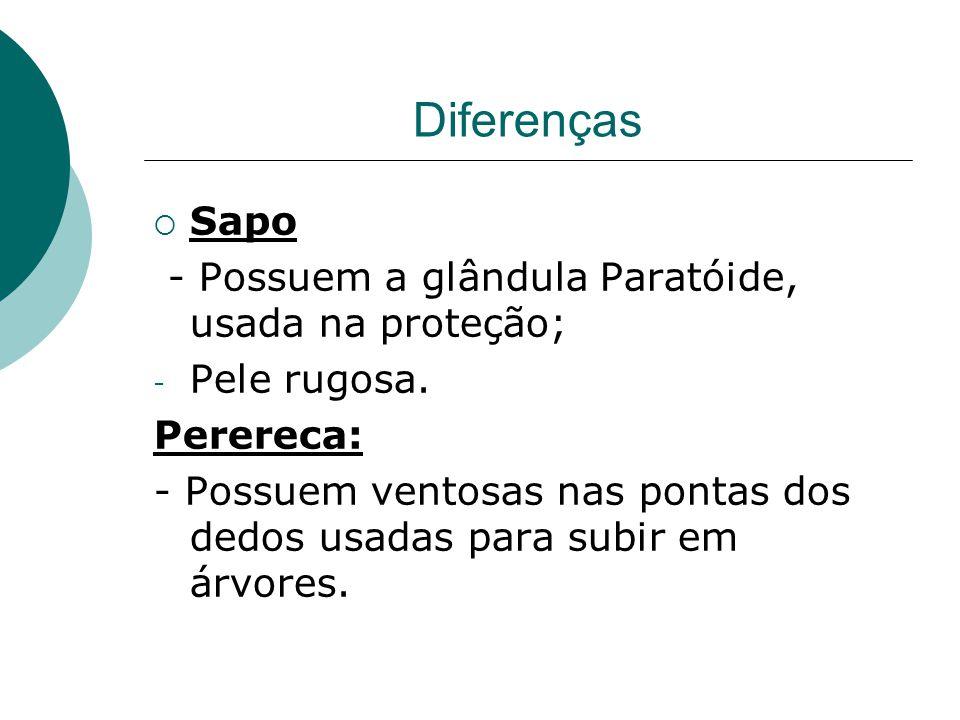 Diferenças  Sapo - Possuem a glândula Paratóide, usada na proteção; - Pele rugosa. Perereca: - Possuem ventosas nas pontas dos dedos usadas para subi