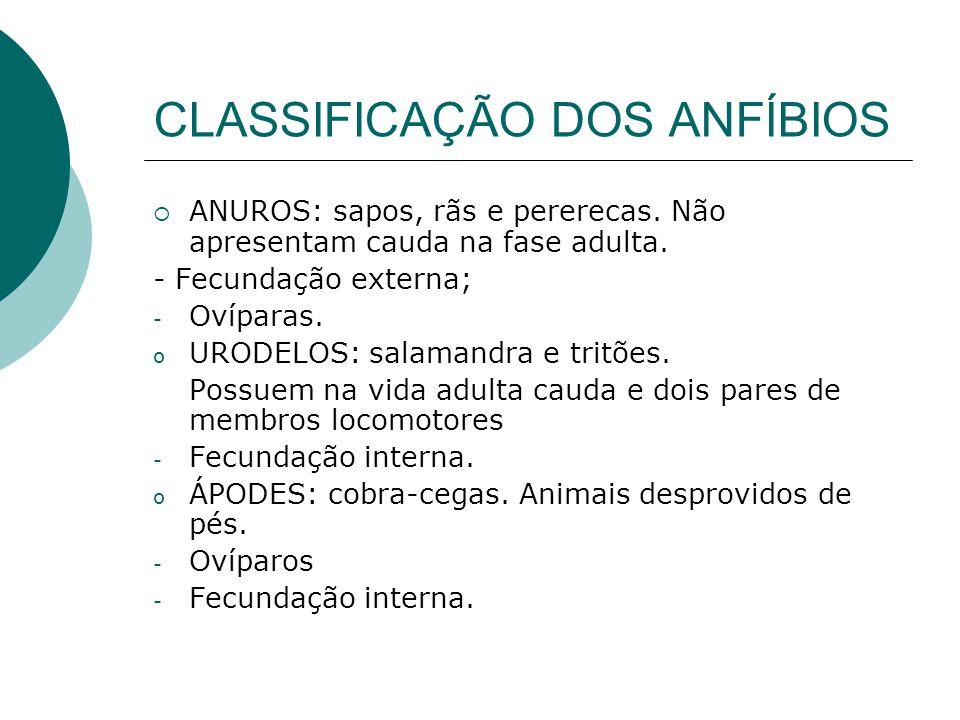 CLASSIFICAÇÃO DOS ANFÍBIOS  ANUROS: sapos, rãs e pererecas. Não apresentam cauda na fase adulta. - Fecundação externa; - Ovíparas. o URODELOS: salama