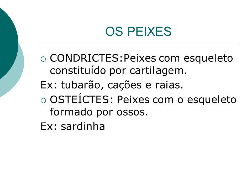 OS PEIXES  CONDRICTES:Peixes com esqueleto constituído por cartilagem. Ex: tubarão, cações e raias.  OSTEÍCTES: Peixes com o esqueleto formado por o