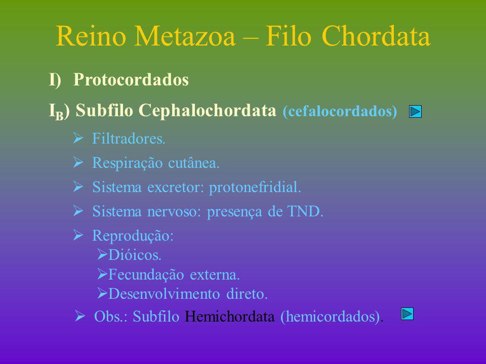 Reino Metazoa – Filo Chordata II)Subfilo Vertebrata (vertebrados) II A ) Peixes – antiga superclasse Piscis.