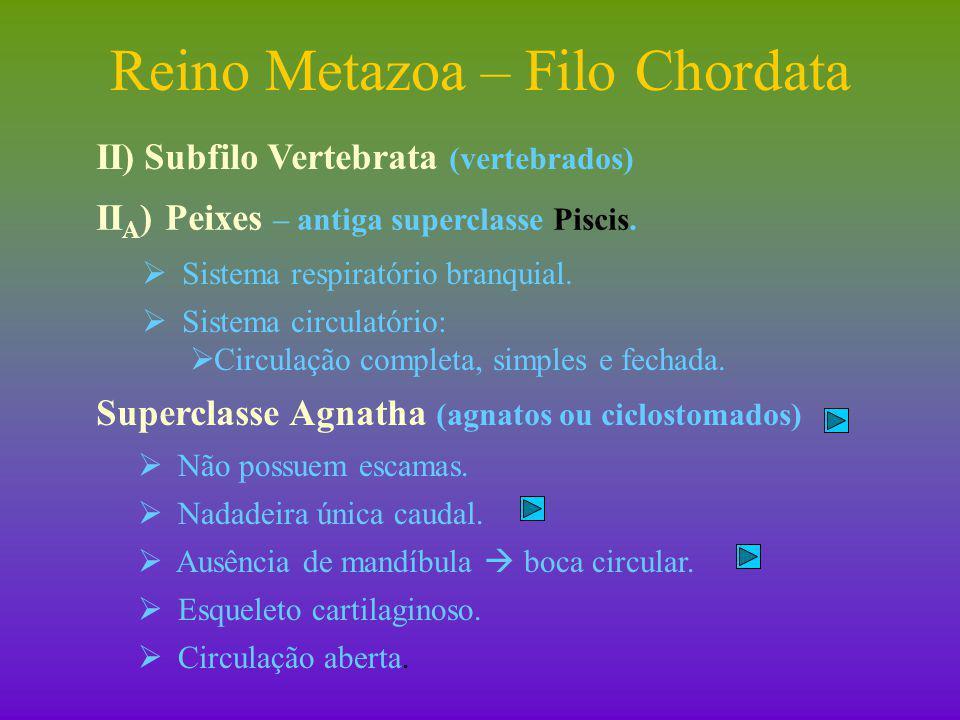Reino Metazoa – Filo Chordata II)Subfilo Vertebrata (vertebrados) II D ) Classe Aves  Características gerais:  Sistema respiratório: pulmonar.