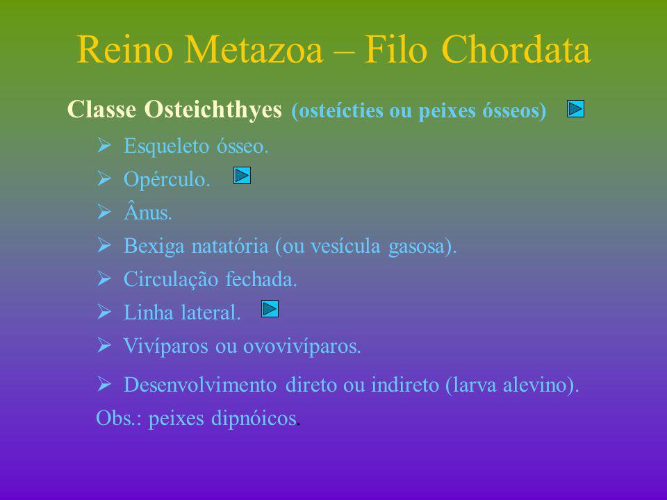 Reino Metazoa – Filo Chordata II)Subfilo Vertebrata (vertebrados) II B ) Classe Amphibia (anfíbios).