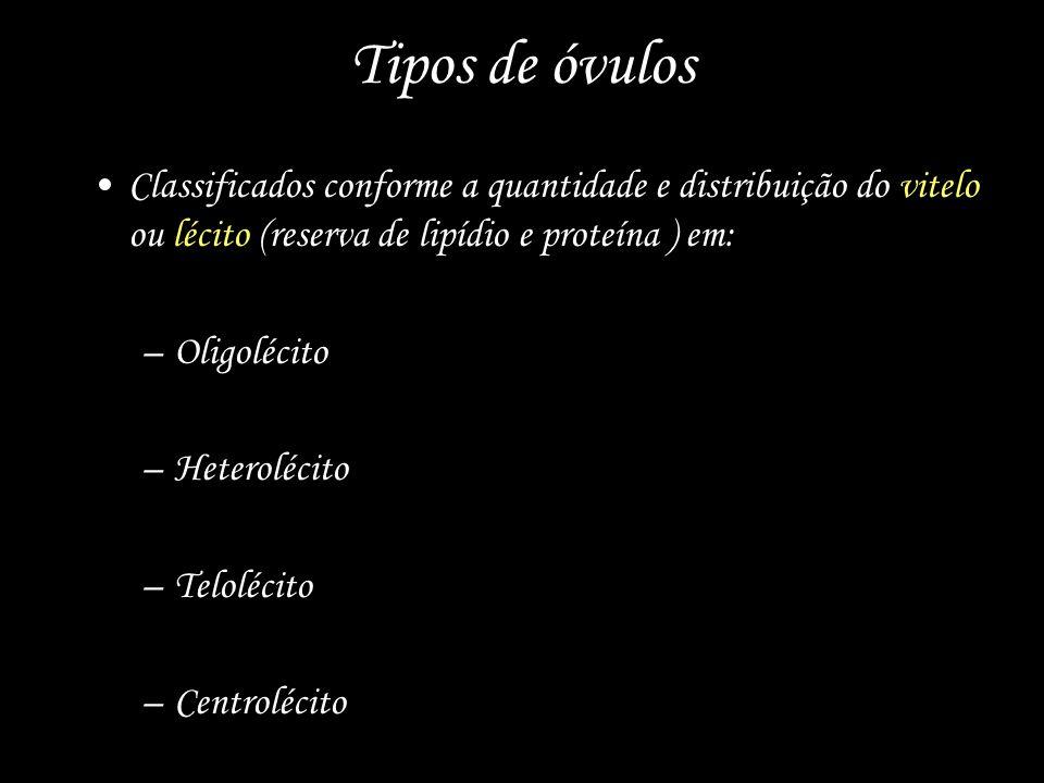 Tipos de óvulos Classificados conforme a quantidade e distribuição do vitelo ou lécito (reserva de lipídio e proteína ) em: –Oligolécito –Heterolécito