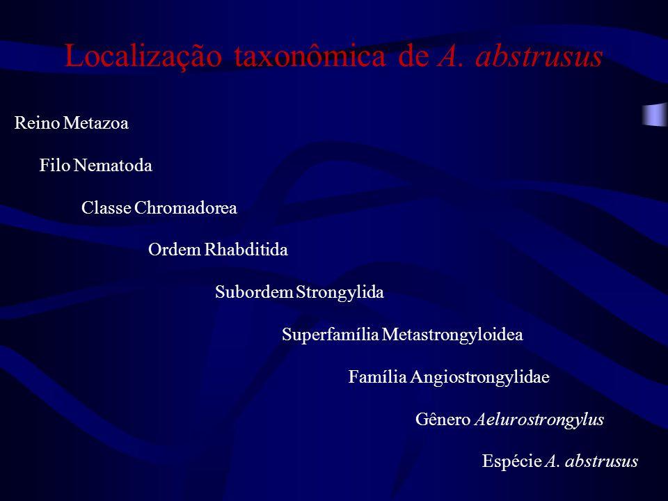 Localização taxonômica de A. abstrusus Reino Metazoa Filo Nematoda Classe Chromadorea Ordem Rhabditida Subordem Strongylida Superfamília Metastrongylo