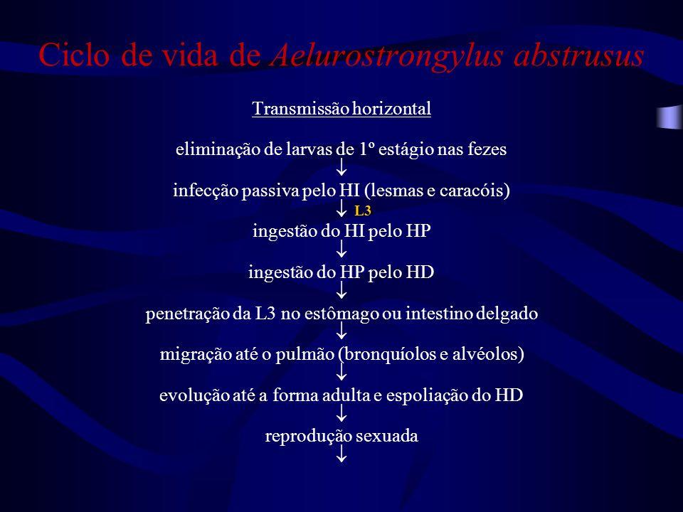 Ciclo de vida de Aelurostrongylus abstrusus Transmissão horizontal eliminação de larvas de 1º estágio nas fezes  infecção passiva pelo HI (lesmas e c