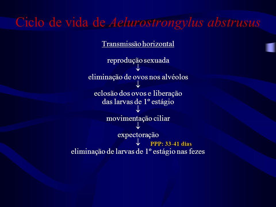 Ciclo de vida de Aelurostrongylus abstrusus Transmissão horizontal reprodução sexuada  eliminação de ovos nos alvéolos  eclosão dos ovos e liberação