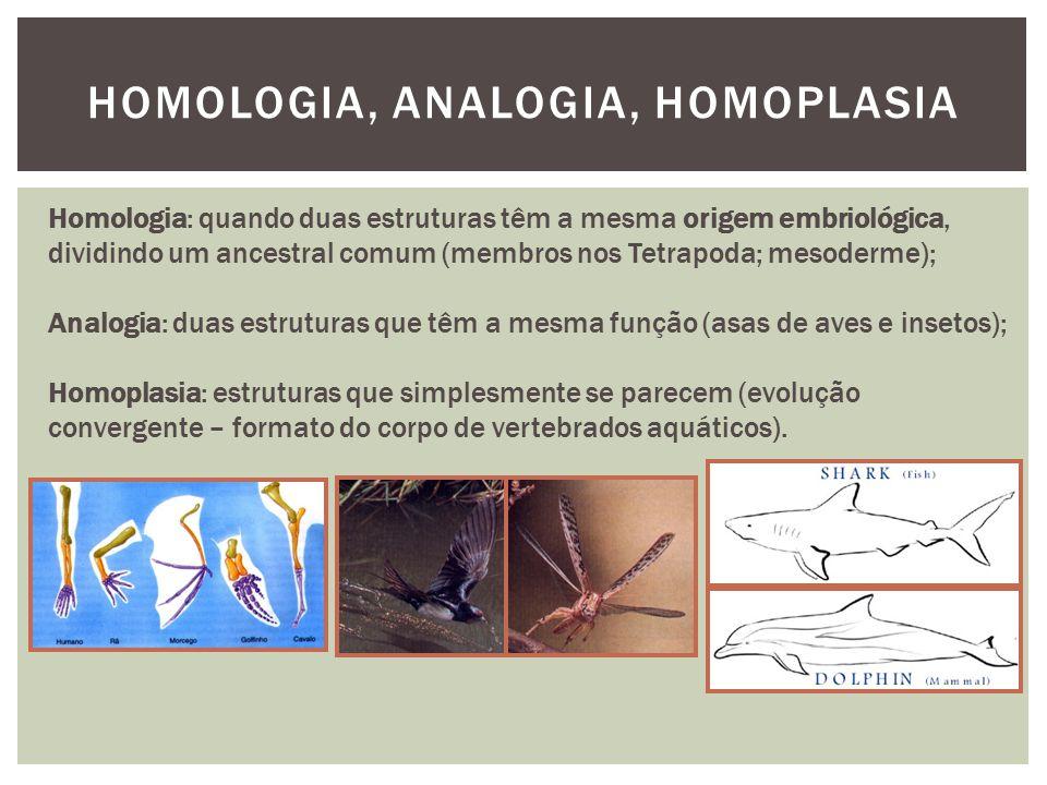 HOMOLOGIA, ANALOGIA, HOMOPLASIA Homologia: quando duas estruturas têm a mesma origem embriológica, dividindo um ancestral comum (membros nos Tetrapoda