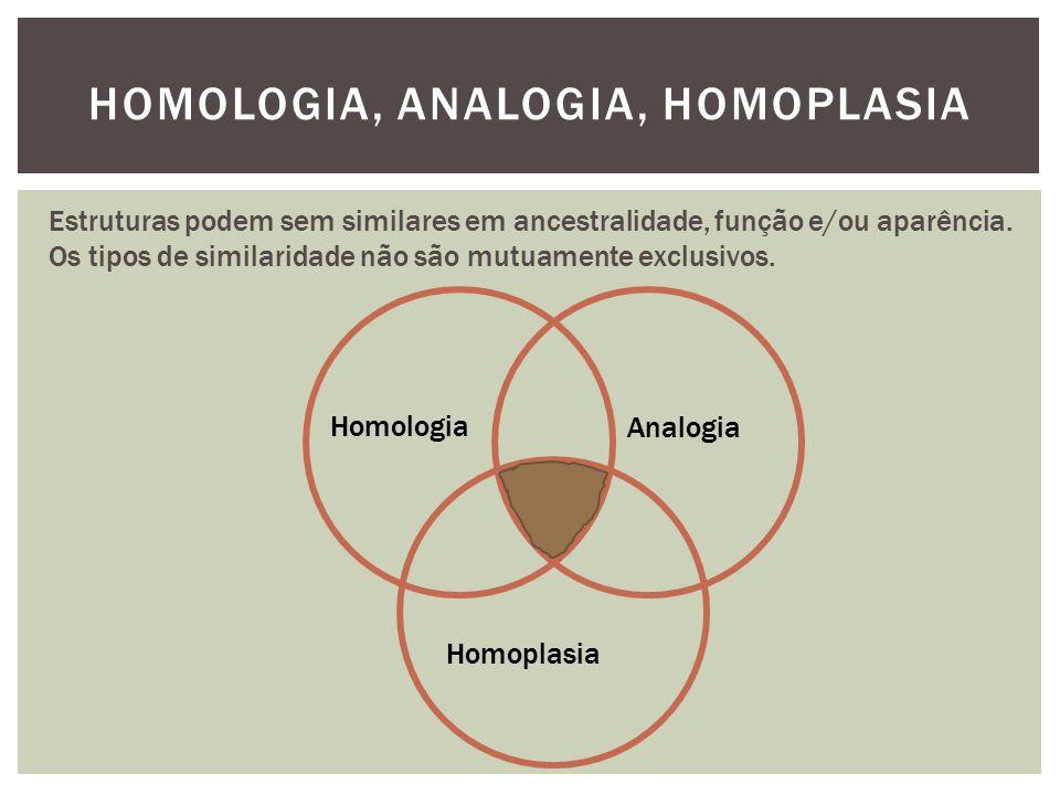 HOMOLOGIA, ANALOGIA, HOMOPLASIA Estruturas podem sem similares em ancestralidade, função e/ou aparência. Os tipos de similaridade não são mutuamente e