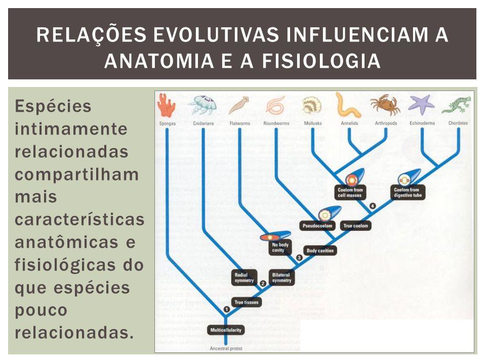 RELAÇÕES EVOLUTIVAS INFLUENCIAM A ANATOMIA E A FISIOLOGIA Espécies intimamente relacionadas compartilham mais características anatômicas e fisiológica