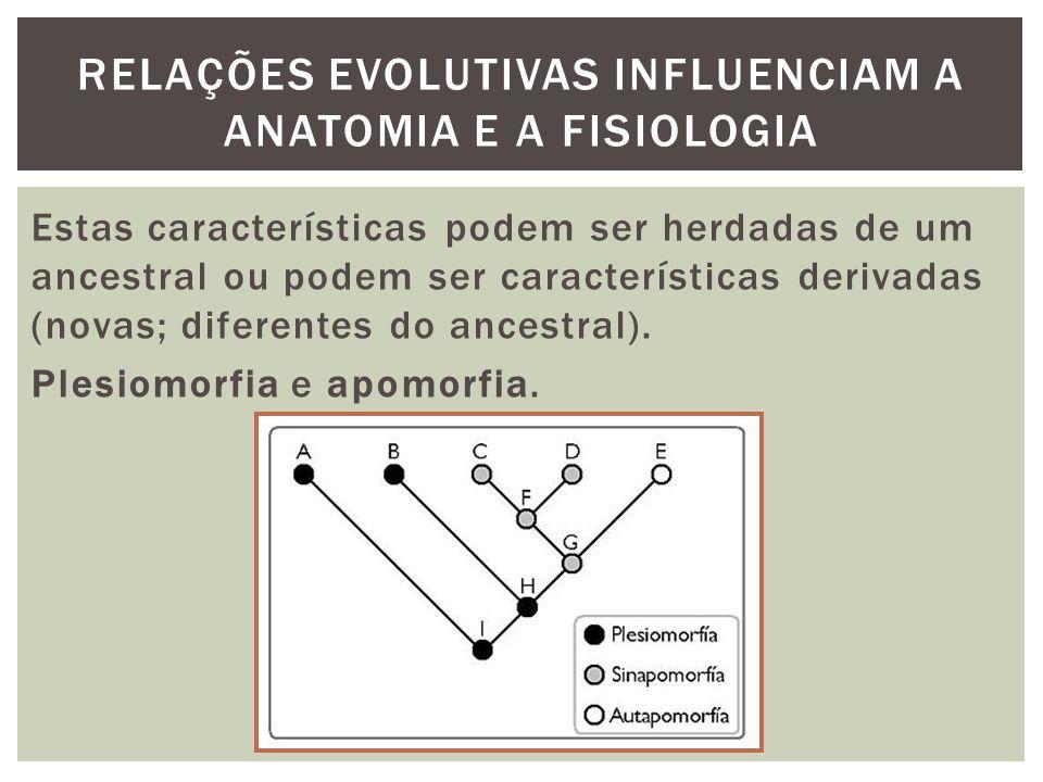 RELAÇÕES EVOLUTIVAS INFLUENCIAM A ANATOMIA E A FISIOLOGIA Estas características podem ser herdadas de um ancestral ou podem ser características deriva