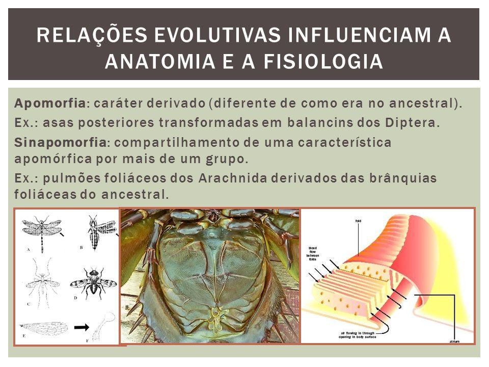 RELAÇÕES EVOLUTIVAS INFLUENCIAM A ANATOMIA E A FISIOLOGIA Apomorfia: caráter derivado (diferente de como era no ancestral). Ex.: asas posteriores tran