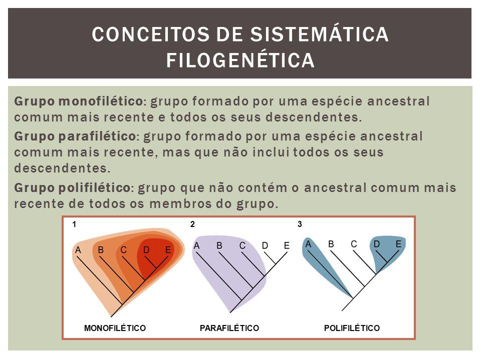 CONCEITOS DE SISTEMÁTICA FILOGENÉTICA Grupo monofilético: grupo formado por uma espécie ancestral comum mais recente e todos os seus descendentes. Gru