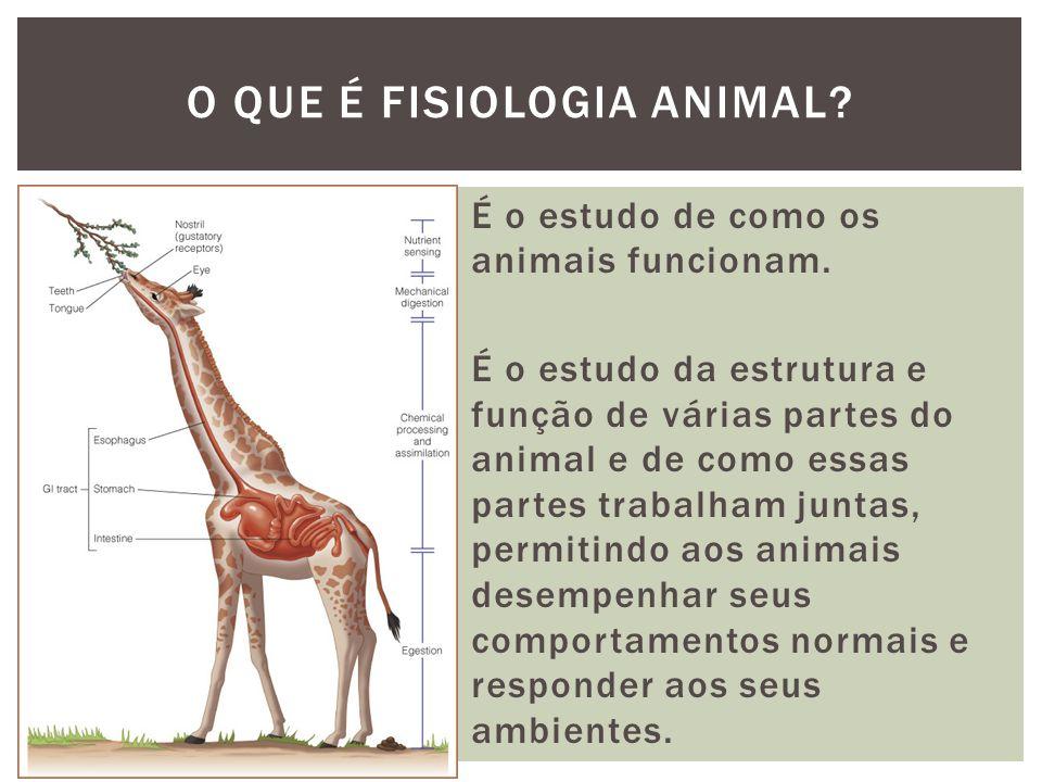 É o estudo de como os animais funcionam. É o estudo da estrutura e função de várias partes do animal e de como essas partes trabalham juntas, permitin