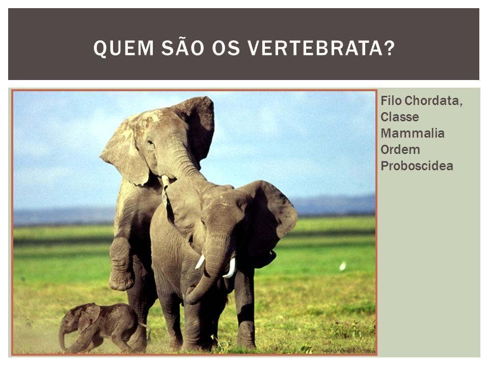 QUEM SÃO OS VERTEBRATA.