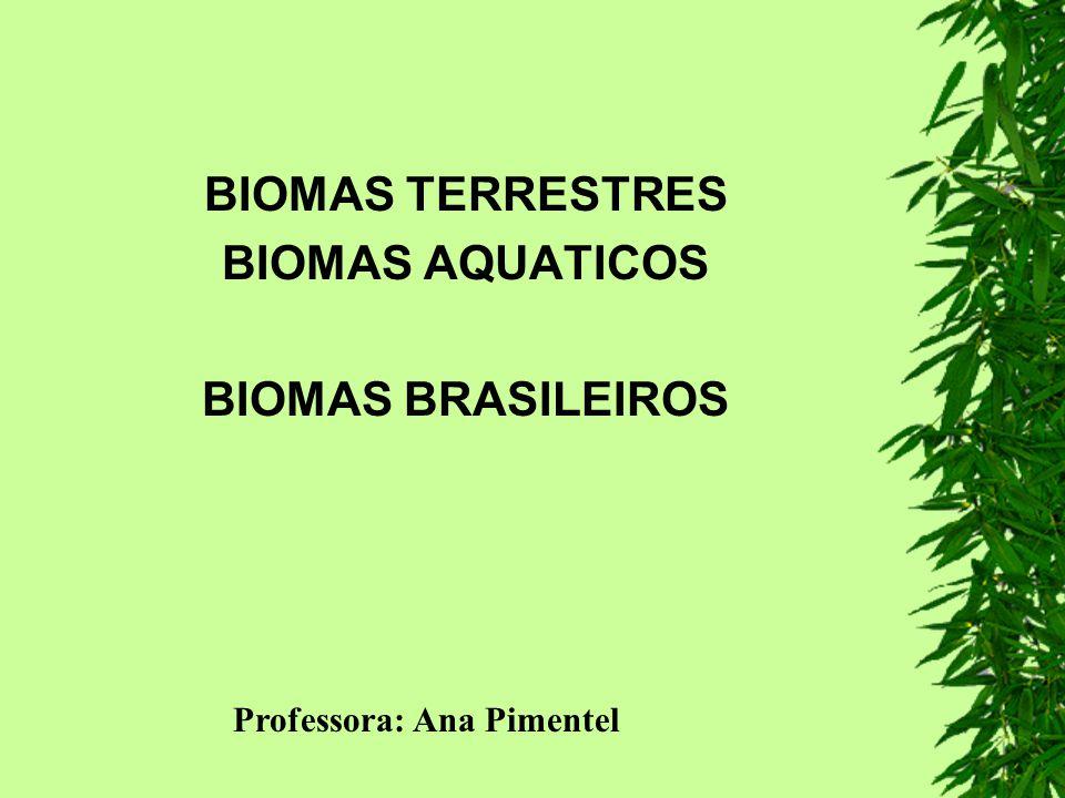 é o nome regional dado às savanas brasileiras é o segundo maior bioma brasileiro com uma área total de aproximadamente 2 mil km2 (20% do territóreo brasileiro), dos quais 300.000 km2 foram reconhecidos em 1993 como Reserva da Biosfera; Os Parques Nacionais Chapada dos Veadeiros e Emas foram declarados Patrimônio Mundial pela UNESCO em 2001.