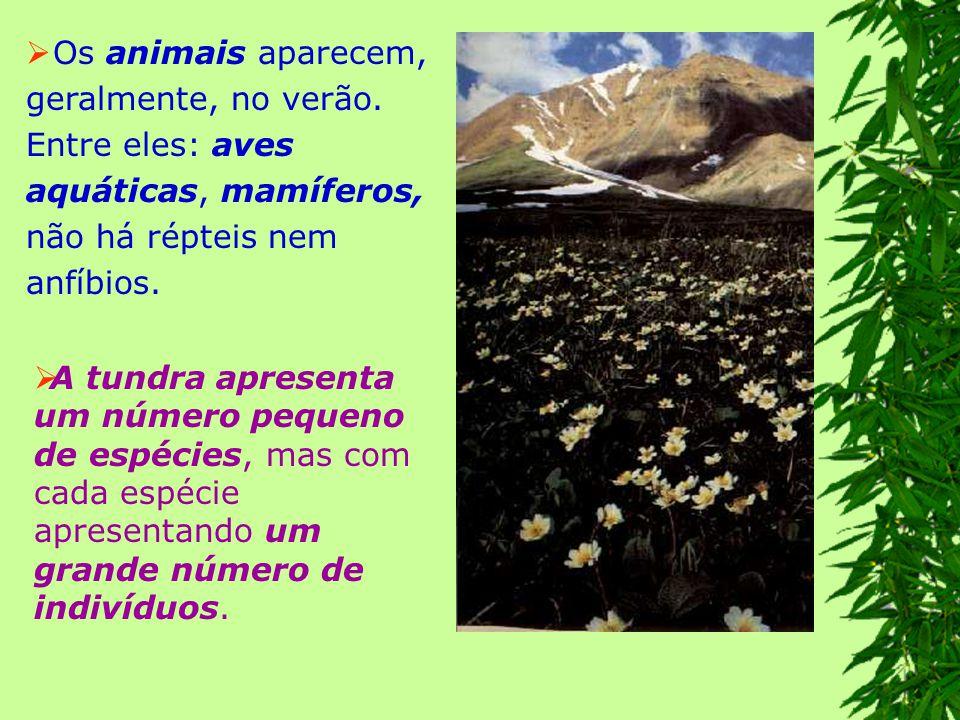 2.Taiga ou floresta de coníferas: localiza- se ao sul da tundra, até o paralelo 60 º.