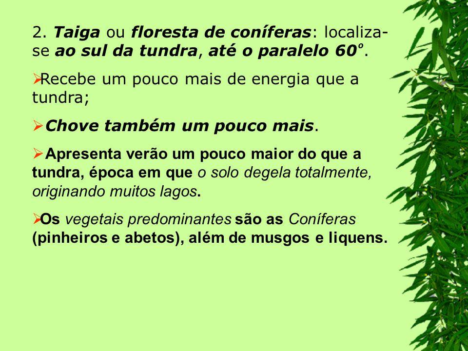 apresentam árvores de folhas largas (latifoliadas) e perenes (perenifólias).