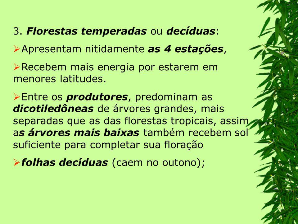 FLORESTA AMAZÔNIA A floresta amazônica apresenta características de seis ecossistemas distintos: 1.Terra Firme – É uma floresta que nunca se inunda.