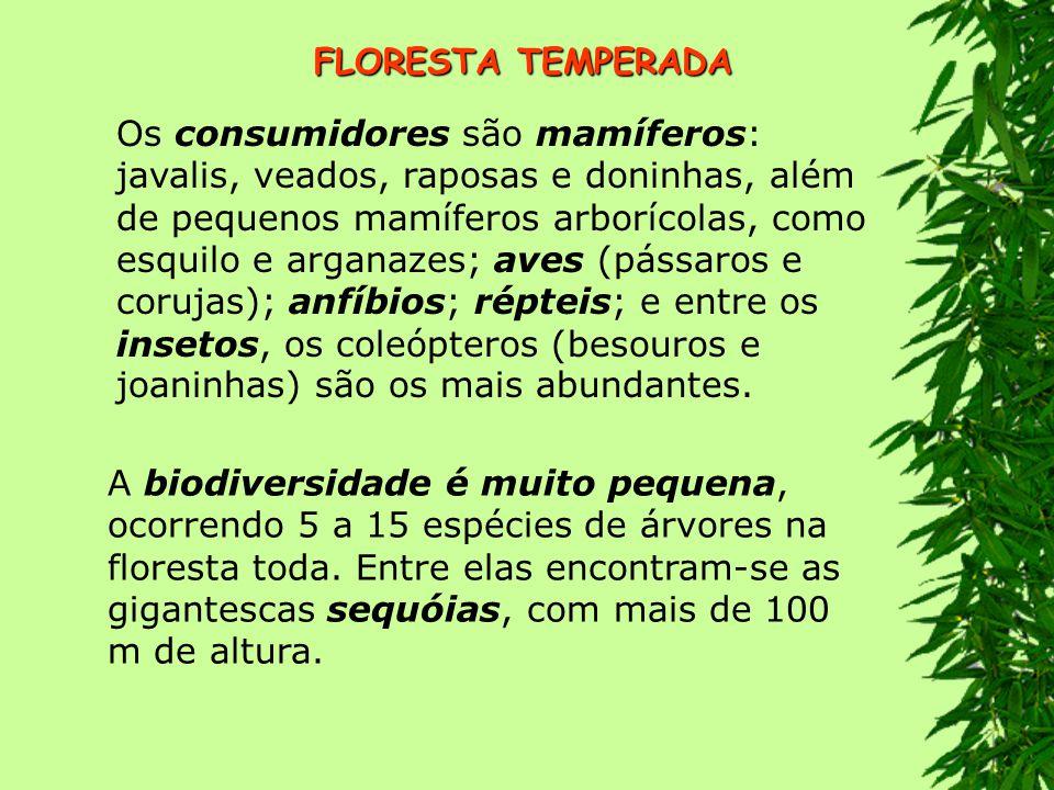 FLORESTA TROPICAL localiza-se entre os trópicos.