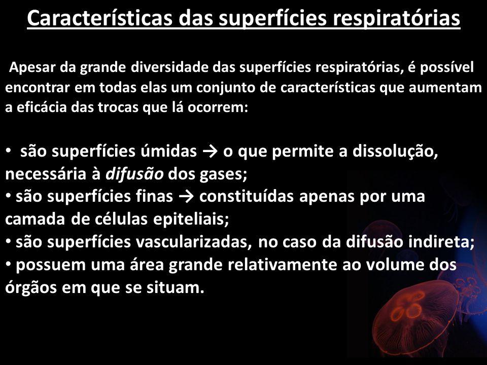 Características das superfícies respiratórias Apesar da grande diversidade das superfícies respiratórias, é possível encontrar em todas elas um conjun