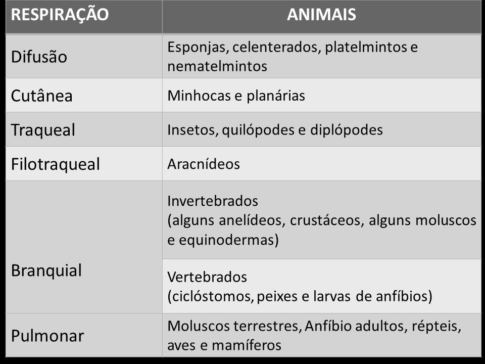 RESPIRAÇÃOANIMAIS Difusão Esponjas, celenterados, platelmintos e nematelmintos Cutânea Minhocas e planárias Traqueal Insetos, quilópodes e diplópodes