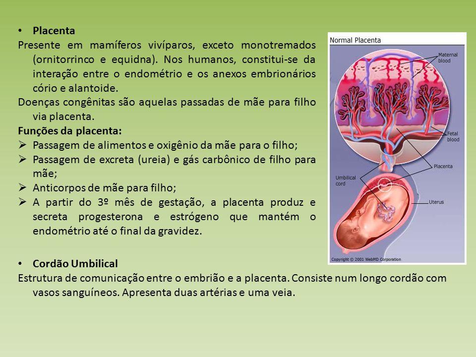 Placenta Presente em mamíferos vivíparos, exceto monotremados (ornitorrinco e equidna).
