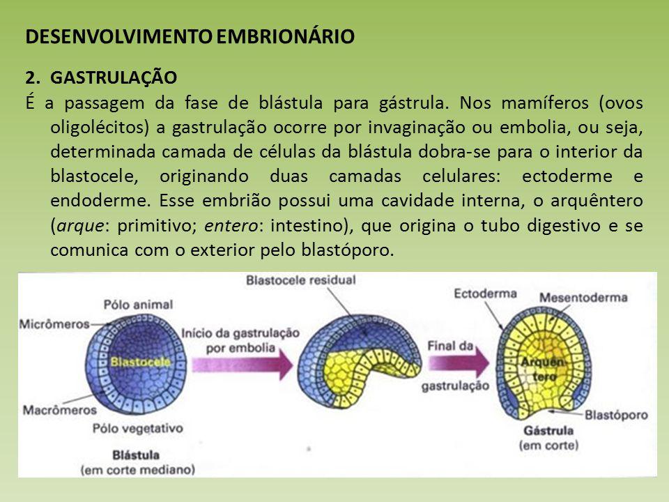 DESENVOLVIMENTO EMBRIONÁRIO 2.GASTRULAÇÃO É a passagem da fase de blástula para gástrula.