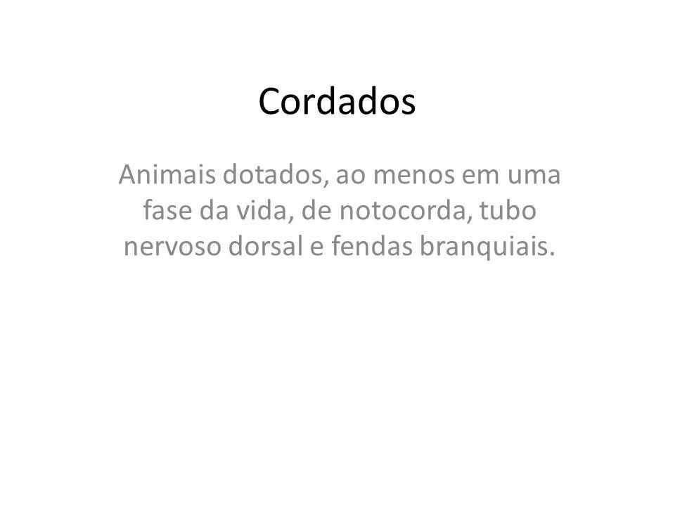 Cordados Animais dotados, ao menos em uma fase da vida, de notocorda, tubo nervoso dorsal e fendas branquiais.