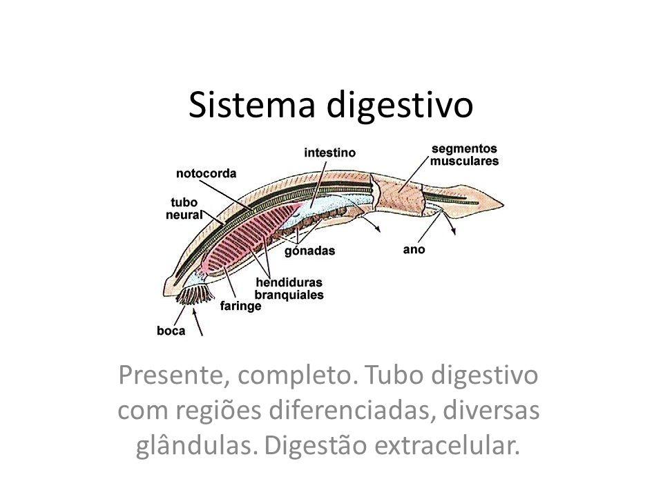 Sistema digestivo Presente, completo. Tubo digestivo com regiões diferenciadas, diversas glândulas.