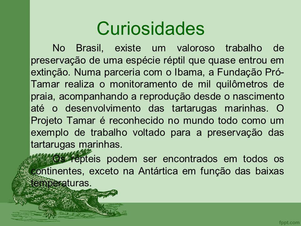 Curiosidades No Brasil, existe um valoroso trabalho de preservação de uma espécie réptil que quase entrou em extinção. Numa parceria com o Ibama, a Fu